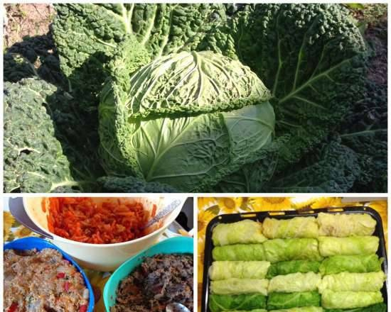 Savoy cabbage rolls with three fillings
